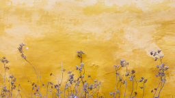 Flowers growing against yellow wall (Issue 2020:1-2)